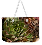 Hens And Chicks Sedum 1 Weekender Tote Bag