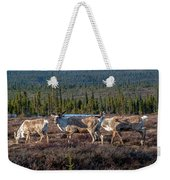 Herd Of Broad Pass Weekender Tote Bag