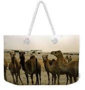 Herd Of Camels In A Farm, Abu Dhabi Weekender Tote Bag