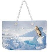 Hide And Seek, Ursus Maritimes, Fulmars Weekender Tote Bag