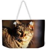 Homeless Cat Weekender Tote Bag