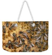 Honey Bee Queen And Colony On Honeycomb Weekender Tote Bag