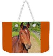 Horse In Stable Weekender Tote Bag