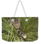 House Cat Hunting In Grass Germany Weekender Tote Bag