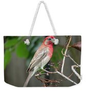 House Finch At Rest Weekender Tote Bag