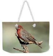 House Finch Carpodacus Mexicanus Weekender Tote Bag