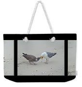 How To Eat A Blue Crab - Great Black Backed Gull In Training Weekender Tote Bag