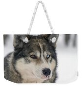 Husky Dog Breading Centre Weekender Tote Bag by Lilach Weiss