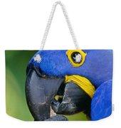 Hyacinth Macaw Anodorhynchus Weekender Tote Bag