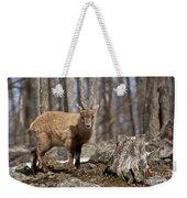 Ibex Pictures 92 Weekender Tote Bag