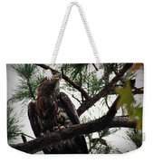 Immature American Bald Eagle Weekender Tote Bag