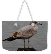 Immature Glaucous Gull Weekender Tote Bag