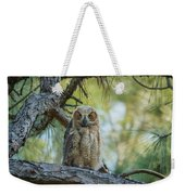 Immature Great Horned Owl Weekender Tote Bag