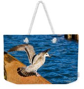 Immature Herring Gull At The Harbour Weekender Tote Bag