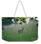 White-tailed Deer In Meadow  Weekender Tote Bag