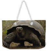 Indefatigable Island Tortoise Galapagos Weekender Tote Bag
