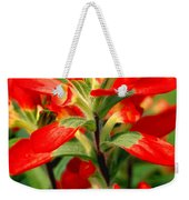 Indian Paintbrush I I Weekender Tote Bag