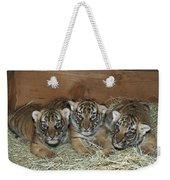 Indochinese Tiger Cubs In Sleeping Box Weekender Tote Bag