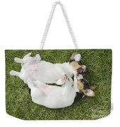 Jack Russell Puppies Weekender Tote Bag