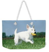 Jack Russell Terrier Dog Weekender Tote Bag