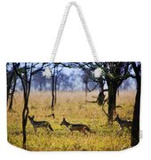 Jackals On Savanna. Safari In Serengeti. Tanzania. Africa Weekender Tote Bag