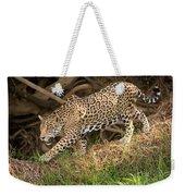 Jaguar Panthera Onca Foraging Weekender Tote Bag