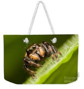 Jumping Spider Phidippus Clarus I Weekender Tote Bag by Clarence Holmes