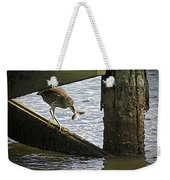 Juvenile Black Crowned Night Heron Weekender Tote Bag
