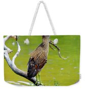 Juvenile Black-crowned Night Heron  Weekender Tote Bag