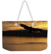 Juvenile Eagle Golden Sunset Weekender Tote Bag