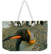 Juvenile King Penguin Weekender Tote Bag
