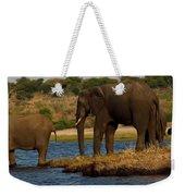 Kalahari Elephants Preparing To Cross Chobe River Weekender Tote Bag
