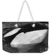 Kandu Orca Seattle Aquarium 1969 Pat Hathaway Photo Killer Whale Seattle Weekender Tote Bag