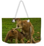 Kangaroo Nursing Its Joey Weekender Tote Bag