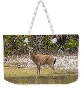 Key Deer Portrait Weekender Tote Bag