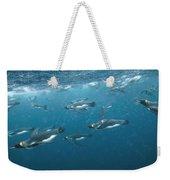 King Penguins Swimming Underwater Weekender Tote Bag