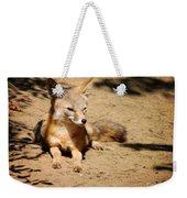 Kit Fox On Campus Weekender Tote Bag