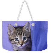 Kitten With A Curtain Weekender Tote Bag