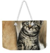 Kitten With Golden Retriever Weekender Tote Bag