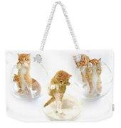 Kittens In Bowl Weekender Tote Bag