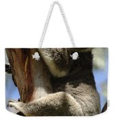 Koala Weekender Tote Bag by Bob Christopher