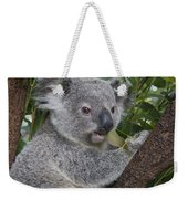 Koala Joey Australia Weekender Tote Bag