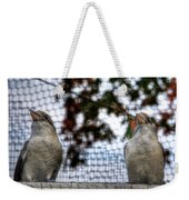 Kookaburra's On Guard At The Buffalo Zoo Weekender Tote Bag