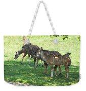 Kudu Antelope In A Straight Line Weekender Tote Bag