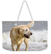 Labrador Dog Playing On Beach Weekender Tote Bag