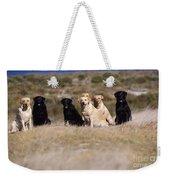 Labrador Dogs Waiting For Orders Weekender Tote Bag