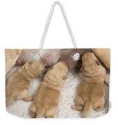 Labrador Puppies Suckling Weekender Tote Bag
