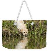Labrador Puppy Drinking Weekender Tote Bag