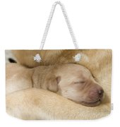 Labrador Puppy On Mother Weekender Tote Bag
