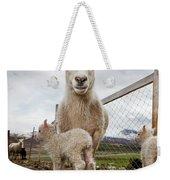 Lamb On A Farm, Iceland Weekender Tote Bag
